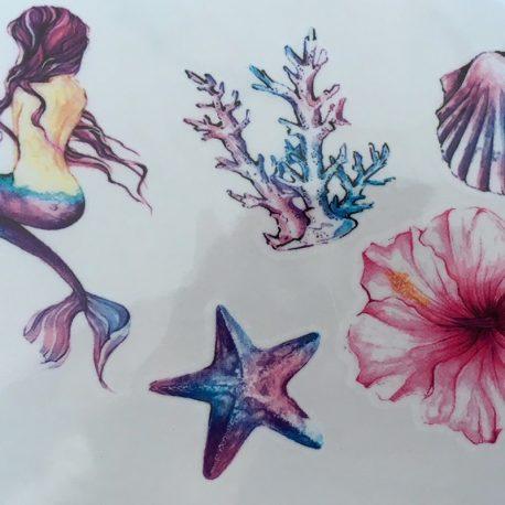 Corail et étoile de mer